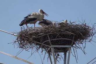 Ornitologii au început