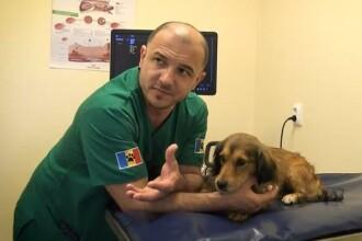 VIDEO. Primul spital românesc de 5 stele pentru animale fără stăpân