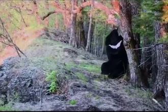 Mânat de curiozitate, un urs brun a descoperit și a distrus o cameră ascunsă