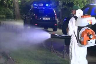 Ce spun autoritățile de la București despre invazia de țânțari