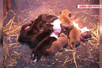 CAMERA ASCUNSĂ. Cum sunt traficate animalele de companie pe Internet