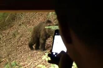 Observatoarele de animale sălbatice, o afacere de succes. Cât costă să vezi un urs în natură