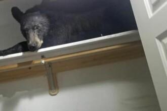 Un urs a pătruns într-o casă și s-a închis pe interior. Cum a fost găsit. VIDEO