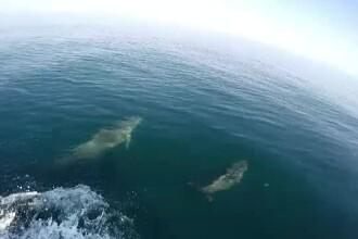 Operațiune fără precedent: delfinii din Marea Neagră, monitorizați din avioane