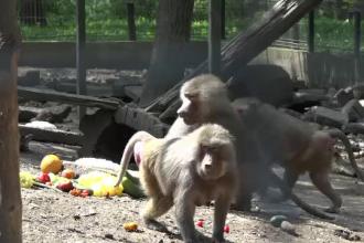 Se caută zilieri pentru Grădina zoologică din Târgu Mureș. Salariul oferit
