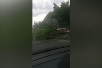 Bilanțul furtunii din Capitală: 37 de copaci căzuți și 21 de mașini avariate