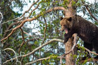 Cum arată bărbatul care a petrecut o lună în bârlogul ursului. Bestia îi fracturase coloana