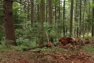 Prejudiciu uriaș creat de defrișări ilegale: peste 3.300 de copaci tăiaţi în Munţii Rodnei