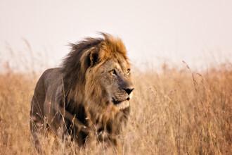 Doi lei au fost testaţi pozitiv cu coronavirus la un parc safari din India