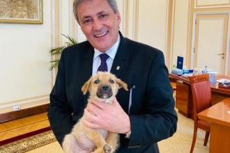 """Gestul făcut de Marcel Vela, după ce doi copii din județul Mureș au omorât un câine: """"Vă rog să-mi scrieți mesaj în privat"""""""