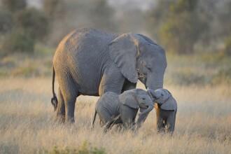Un elefant a fost ucis de localnici cu mâncare ce conținea artificii. Chinul prin care a trecut animalul. VIDEO
