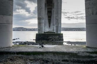 Imagini sfâșietoare. Un câine și-a așteptat stăpânul timp de 4 zile pe un pod, după ce l-a privit cum se sinucide. VIDEO