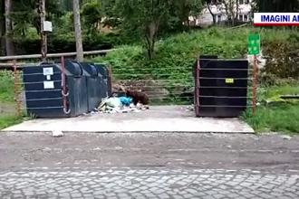 Un urs și-a făcut apariția în centrul stațiunii Băile Tușnad. Ce creatură l-a speriat