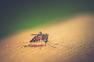 S-au izolat de coronavirus, dar a apărut o altă epidemie. Drama trăită în Asia