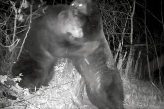 Confruntarea titanilor. Un urs chinez și unul rus s-au bătut chiar pe granița dintre cele două state. VIDEO