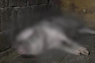 Un urs a ucis doi porci într-o gospodărie din Câmpulung Muscel