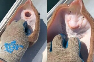 """Un video viral în care o creatură marină """"gâdilată"""" pare că """"zâmbește"""" ascunde un adevăr teribil"""