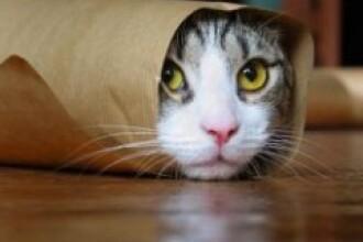Pui de pisica salvat, dupa a ramas intepenit intr-o teava!