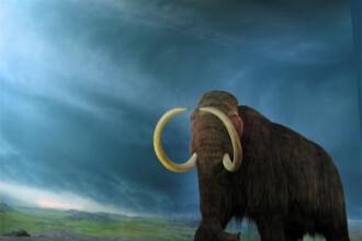 Parti din scheletul unui mamut, gasite in apele Siretului!
