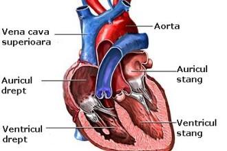 Grasimea din jurul gatului anunta boli cardiovasculare