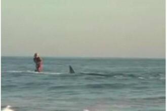 Asta da sport extrem! Surf printre rechini