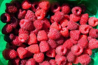 Vindem toate fructele de padure in strainatate. Noi mancam din Olanda