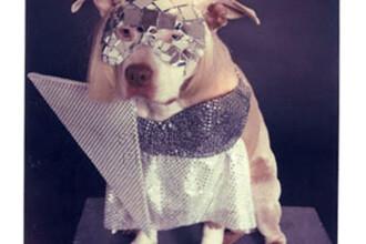 Doggie GaGa! Si cainii adopta stilul Lady GaGa!