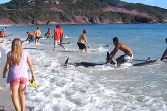 Imaginile care iti vor reda increderea in omenire. S-a intamplat pe o plaja din Rio de Janeiro