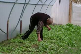 Serele cu legume bio, o afacere profitabila. Castigul poate fi de doua ori mai mare decat investitia