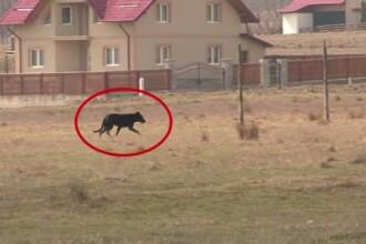 Copilul sfasiat de caini in Suceava, adus acasa pentru ultima oara. Un caine gresiv a fost impuscat