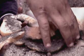 Imaginea saraciei extreme, la Arad. Foamea i-a impins pe 5 frati sa manance noroi pe paine