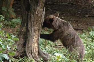 Un barbat din Bistrita-Nasaud a ajuns la spital dupa ce a fost atacat de un urs
