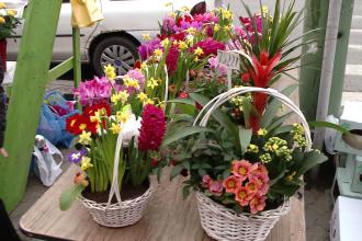Vizita in lumea florilor
