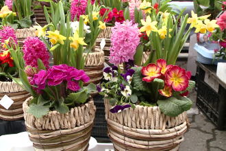 Au ramas fara flori inainte de 8 martie. Florarii din Beclean, sanctionati cu 8.000 de lei