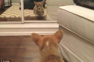 Un clip adorabil. Momentul in care un pui de caine se vede pentru prima oara in oglinda. VIDEO