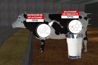 Criza contaminarii cu aflatoxina. Lista alimentelor in care se poate dezvolta toxina cancerigena