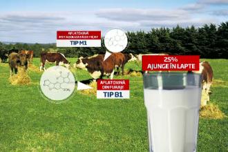 Autoritatile ne asigura ca laptele de pe raft nu este contaminat. Fermierii, disperati de pierderi