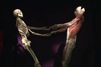 Expozitie controversata la Muzeul Antipa: 200 de trupuri umane, conservate in silicon