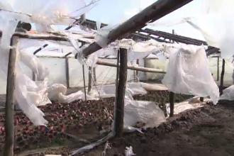 Agricultorii carora vantul le-a distrus solariile avertizeaza ca vor creste pretul legumelor