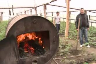 Iarna din martie va creste pretul legumelor. Oamenii dorm in solarii ca sa puna lemne pe foc in soba