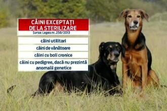 LISTA cainilor care nu vor fi sterilizati. Autoritatile anunta insa ca niciun animal nu va scapa de microcipare