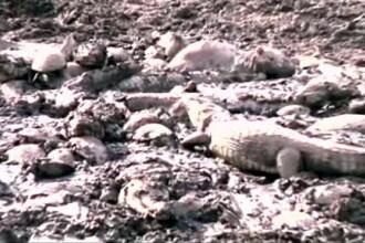 Pesti pe uscat si crocodili care se zbat in mocirla. Imagini de groaza in Columbia, afectata de o seceta catastrofala. VIDEO