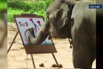Misterul din spatele elefantilor care picteaza mai bine ca multi oameni a fost rezolvat de un zoolog englez