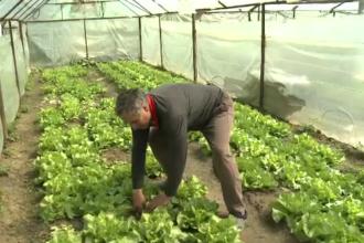 Fermele de familie ar putea salva agricultura, daca ar avea loc in supermarketuri. Statul da 1.500 EUR/an, dar promite 15.000