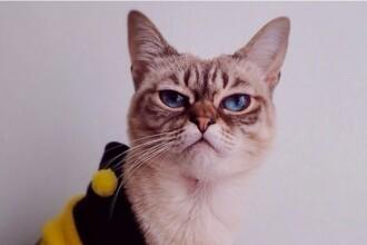 Sauer-kraut, pisicuta cu mutra