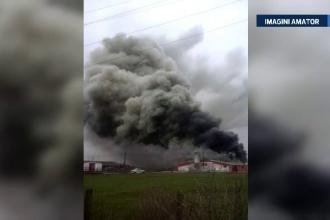 4400 de porci au ars de vii, in urma unui incendiu puternic produs la o ferma de langa Satu Mare. Patronul nu avea asigurare