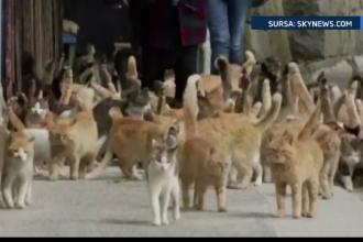 Insula japoneza unde traiesc 22 de oameni si 120 de pisici. Care este cea mai mare frica a locuitorilor