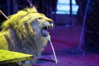 Contre in Parlament, dupa ce Remus Cernea a propus ca animalele salbatice sa dispara de la circ.
