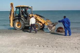 Descoperire socanta pe plaja din Mamaia. Ce a cazut de pe o nava si a ajuns pe nisip