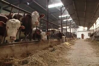 Micii producatori de lapte din Romania au ajuns in pragul falimentului.